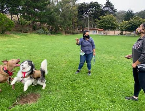 Troubles with your dog? (San Francisco Bay Area)
